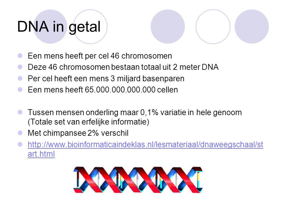 Van genotype naar fenotype Op ons DNA liggen 30.000 genen 3% van je DNA maar genen (= coderend DNA), andere 97% is niet- coderend DNA ( Junk-DNA ) Gen = stuk DNA dat codeert voor een erfelijke eigenschap (Genotype) Gen kan vertaalt worden in een enzym (eiwit) Enzym (eiwit) bepalen eigenschappen Bepalen hoe je er uit ziet (Fenotype)