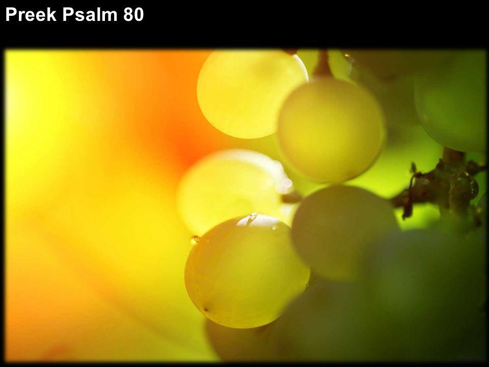 Toon uw lichtend gelaat Keer ons lot ten goede, toon uw lichtend gelaat - Ps. 80:4; 8; 20