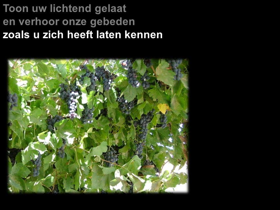 Toon uw lichtend gelaat en verhoor onze gebeden zoals u zich heeft laten kennen Israël is de wijngaard van de HEER van de hemelse machten, de uitgelezen aanplant zijn de inwoners van Juda.