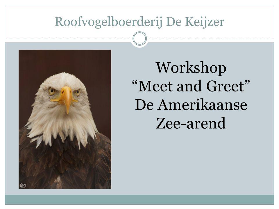 Roofvogelboerderij De Keijzer Workshop Meet and Greet De Amerikaanse Zee-arend