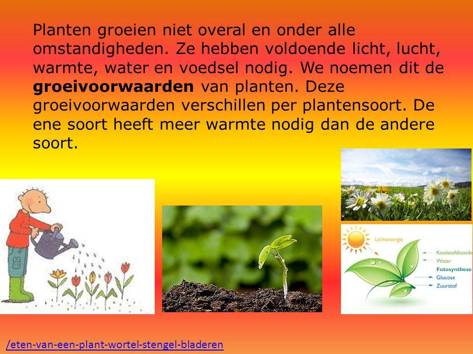 Planten groeien niet overal en onder alle omstandigheden. Ze hebben voldoende licht, lucht, warmte, water en voedsel nodig. We noemen dit de groeivoor