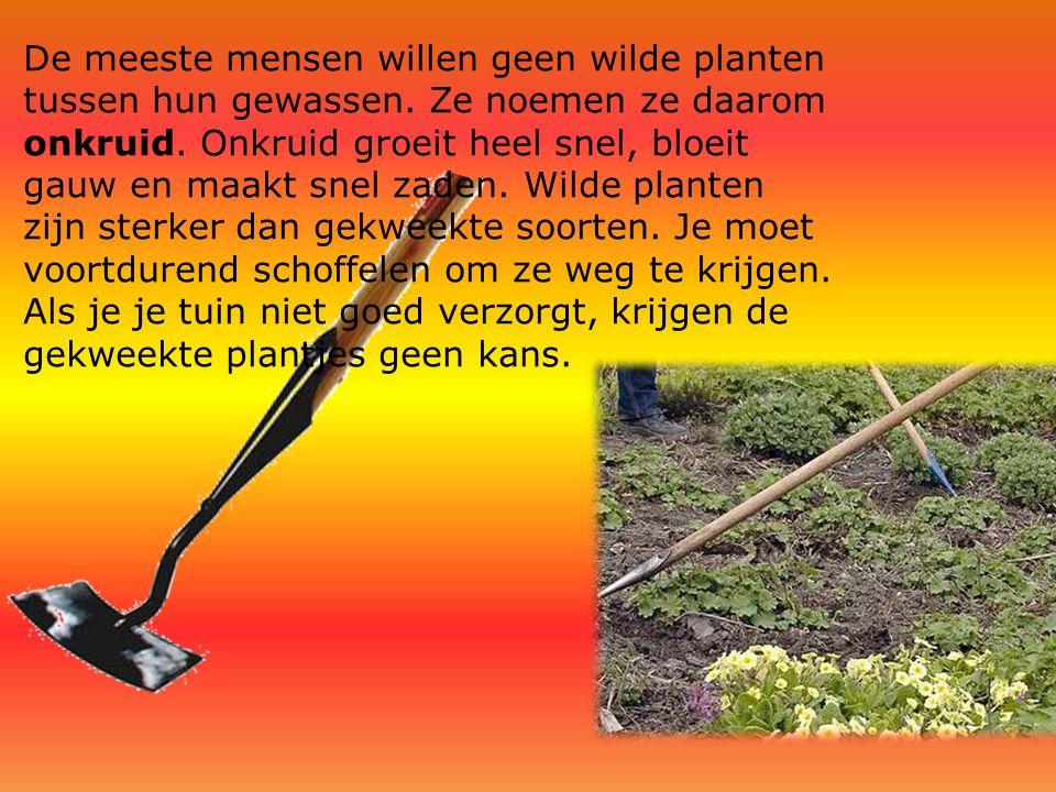 De meeste mensen willen geen wilde planten tussen hun gewassen. Ze noemen ze daarom onkruid. Onkruid groeit heel snel, bloeit gauw en maakt snel zaden