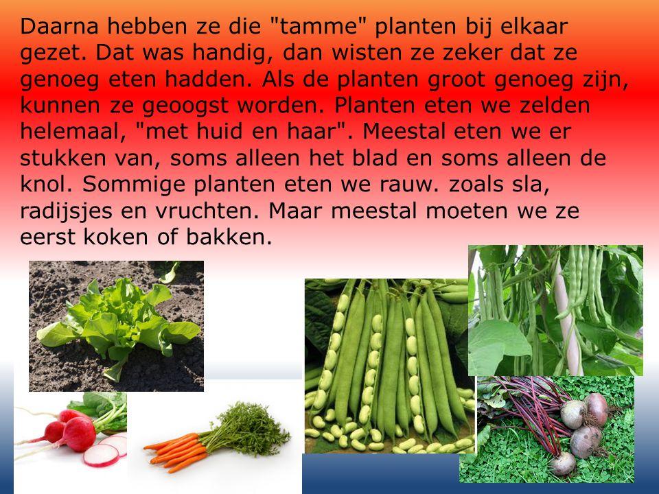 Veel planten gaan eerst naar de fabriek.Daar worden ze verwerkt tot allerlei voedingsmiddelen.