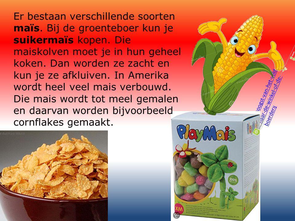 In ons koude Nederland wordt vooral snijmaïs verbouwd.
