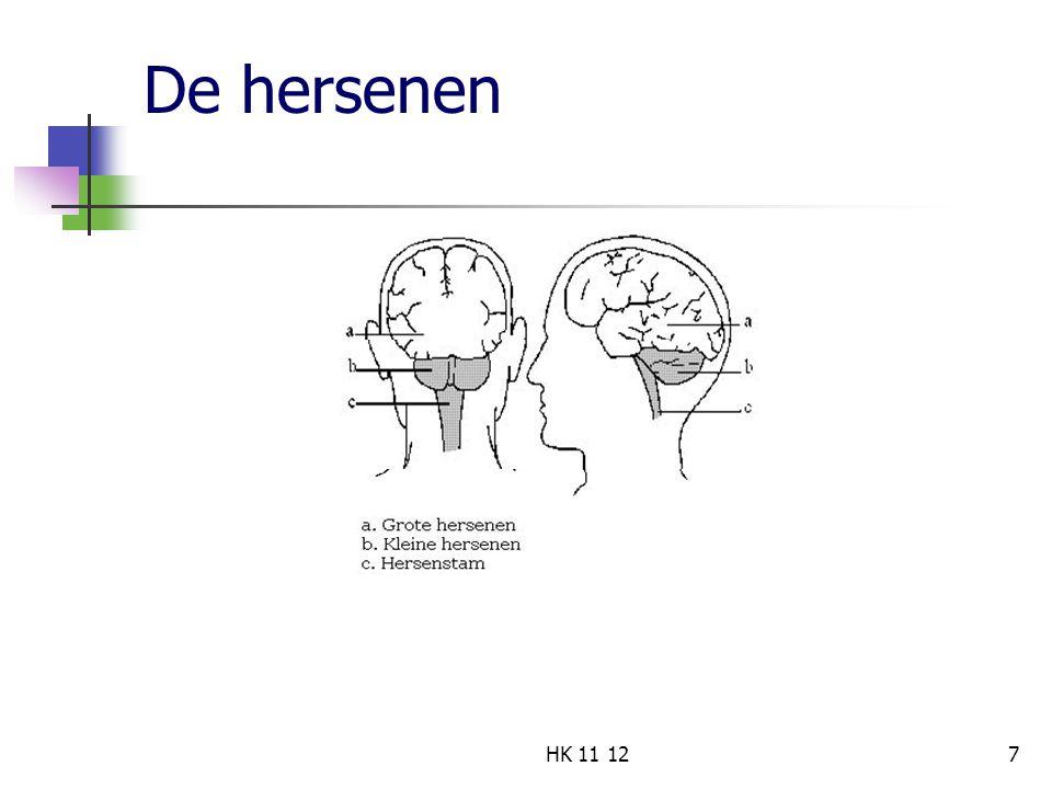 De hersenen 7HK 11 12