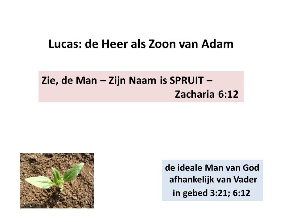 Zie, de Man – Zijn Naam is SPRUIT – Zacharia 6:12 Lucas: de Heer als Zoon van Adam de ideale Man van God afhankelijk van Vader in gebed 3:21; 6:12