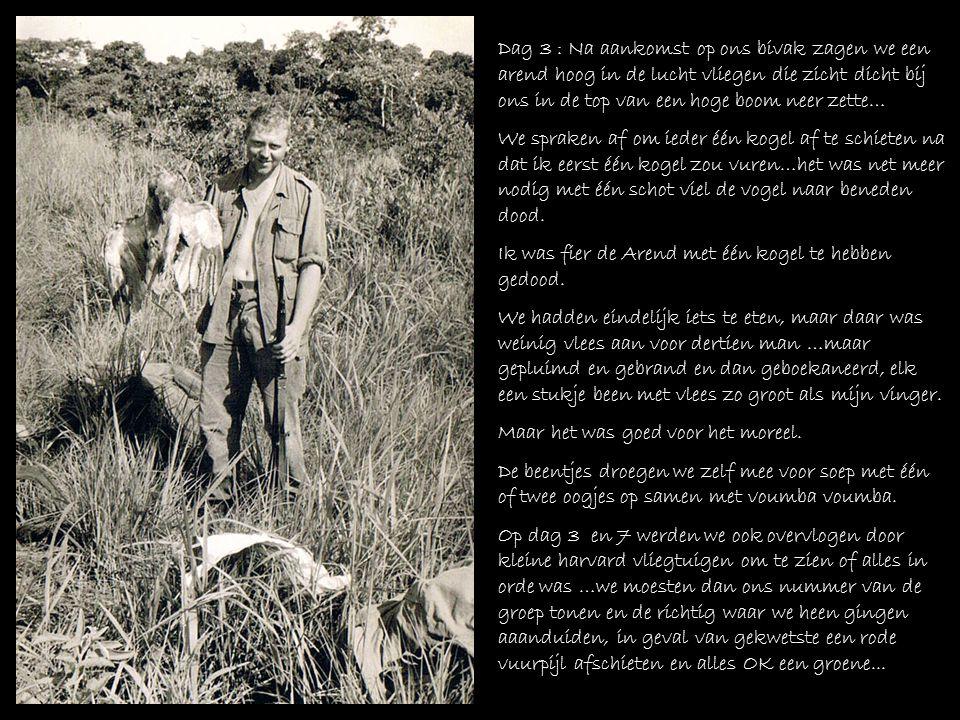 Dag 3 : Arend geschoten door Willy Fierens