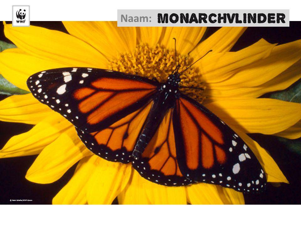 © Kevin Schafer/WWF-Canon Naam: