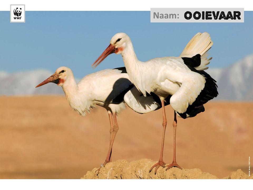 ©Martin Harvey / WWF-Canon Naam: