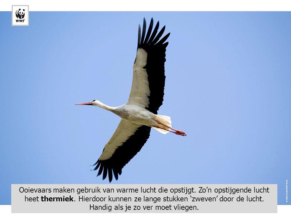 © Sanchez & Lope/WWF-Canon Naam: Kraanvogels komen ook bij ons voor.
