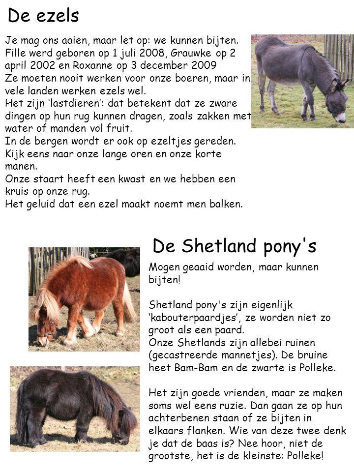 De ezels Je mag ons aaien, maar let op: we kunnen bijten. Fille werd geboren op 1 juli 2008, Grauwke op 2 april 2002 en Roxanne op 3 december 2009 Ze