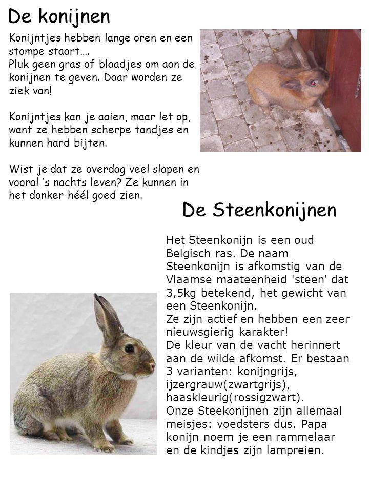 De konijnen Konijntjes hebben lange oren en een stompe staart…. Pluk geen gras of blaadjes om aan de konijnen te geven. Daar worden ze ziek van! Konij