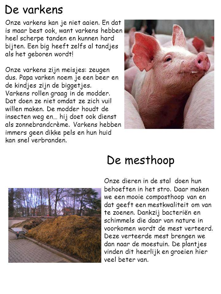 De varkens Onze varkens kan je niet aaien. En dat is maar best ook, want varkens hebben heel scherpe tanden en kunnen hard bijten. Een big heeft zelfs