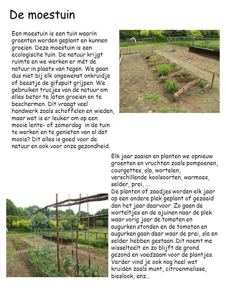 De moestuin Een moestuin is een tuin waarin groenten worden geplant en kunnen groeien. Deze moestuin is een ecologische tuin. De natuur krijgt ruimte