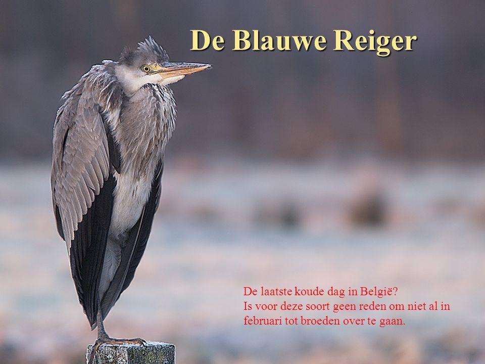 Het Damhert Dit damhert is een van de bewoners van de Belgische Ardennen.