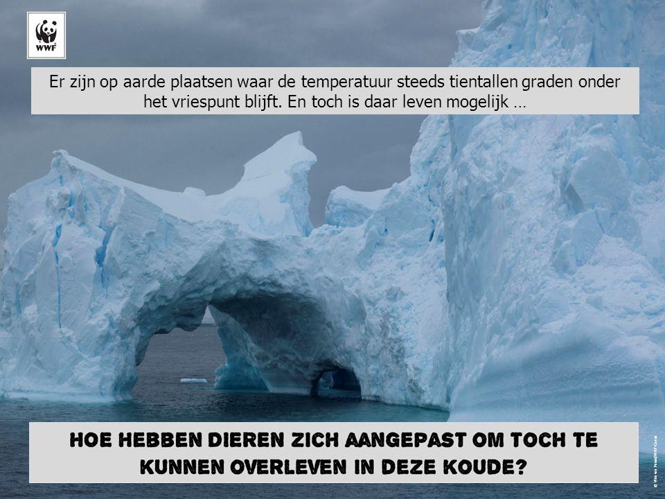© Wim van Passel/WWF-Canon Er zijn op aarde plaatsen waar de temperatuur steeds tientallen graden onder het vriespunt blijft.