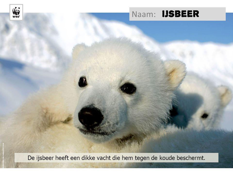 © Jon Aars/Norwegian Polar Institute/WWF-Canon De ijsbeer heeft een dikke vacht die hem tegen de koude beschermt. Naam: