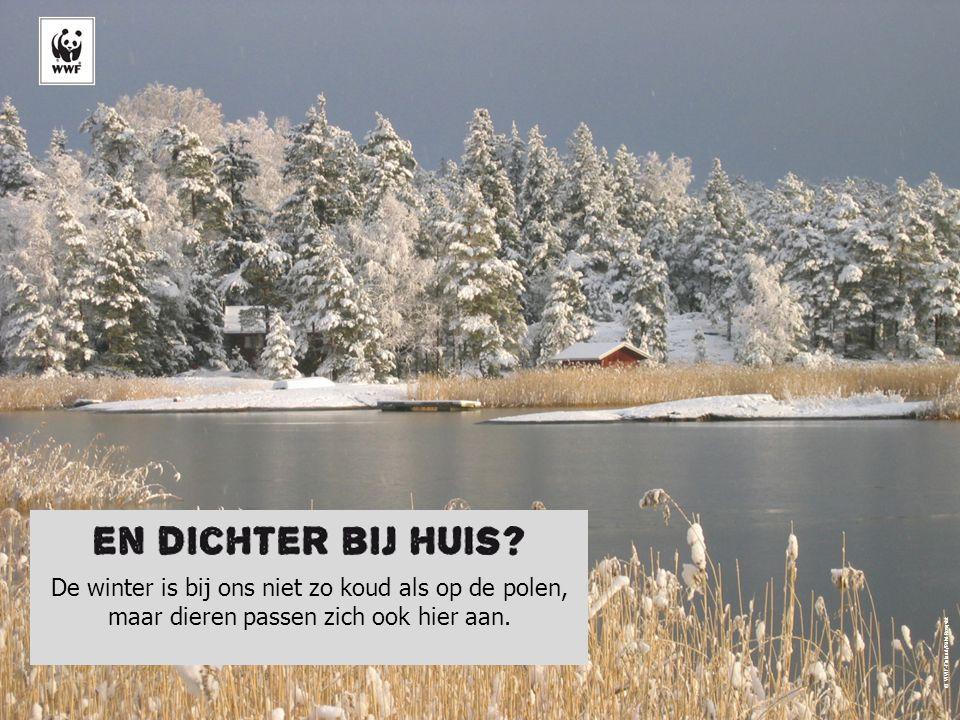 De winter is bij ons niet zo koud als op de polen, maar dieren passen zich ook hier aan. © WWF-Finland/Pälvi Rosqvist