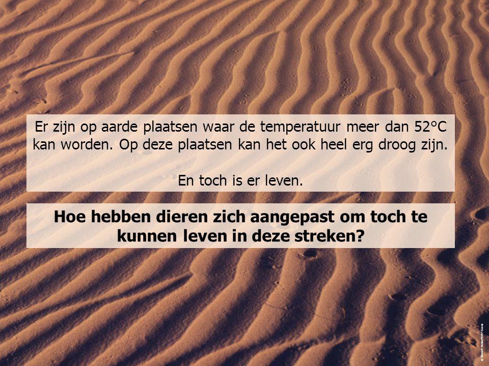 Er zijn op aarde plaatsen waar de temperatuur meer dan 52°C kan worden. Op deze plaatsen kan het ook heel erg droog zijn. En toch is er leven. Hoe heb