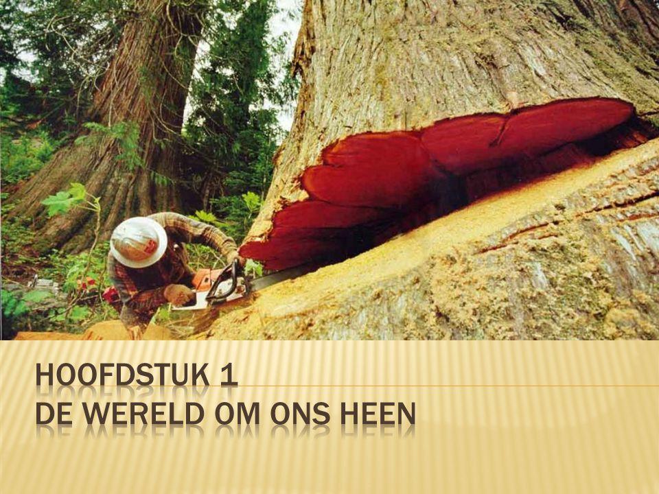 Je : - kunt aangeven dat hout een natuurlijk materiaal is afkomstig van bomen; - kunt omschrijven wat loofhout en naaldhout is en voorbeelden hiervan noemen; - kunt verschillende houtverbindingen herkennen en benoemen; -kunt omschrijven wat techniek is