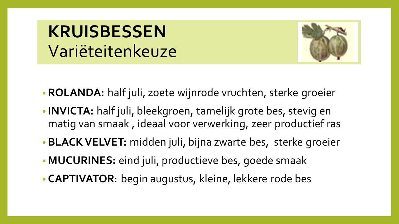 KRUISBESSEN Variëteitenkeuze ROLANDA: half juli, zoete wijnrode vruchten, sterke groeier INVICTA: half juli, bleekgroen, tamelijk grote bes, stevig en