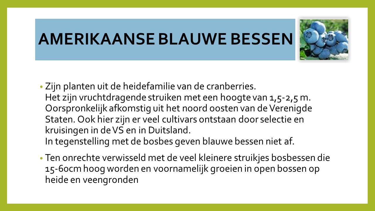AMERIKAANSE BLAUWE BESSEN Zijn planten uit de heidefamilie van de cranberries. Het zijn vruchtdragende struiken met een hoogte van 1,5-2,5 m. Oorspron