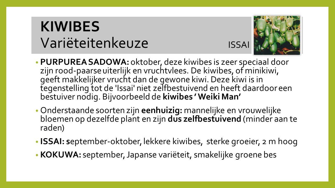 PURPUREA SADOWA: oktober, deze kiwibes is zeer speciaal door zijn rood-paarse uiterlijk en vruchtvlees. De kiwibes, of minikiwi, geeft makkelijker vru