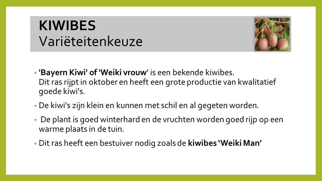 'Bayern Kiwi' of 'Weiki vrouw' is een bekende kiwibes. Dit ras rijpt in oktober en heeft een grote productie van kwalitatief goede kiwi's. De kiwi's z