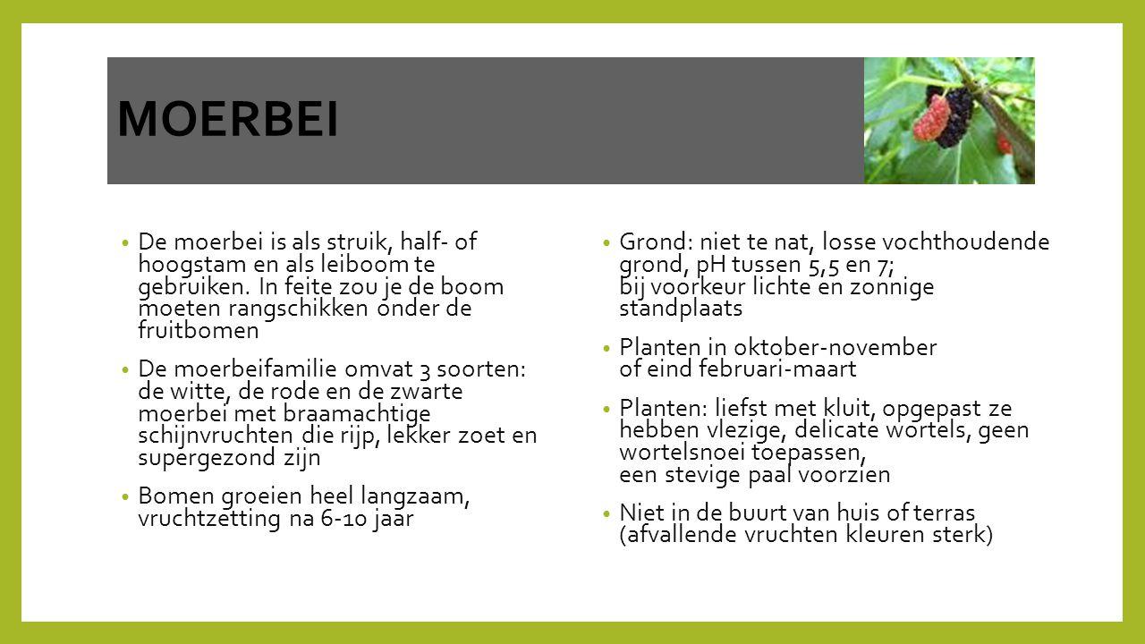 MOERBEI De moerbei is als struik, half- of hoogstam en als leiboom te gebruiken. In feite zou je de boom moeten rangschikken onder de fruitbomen De mo