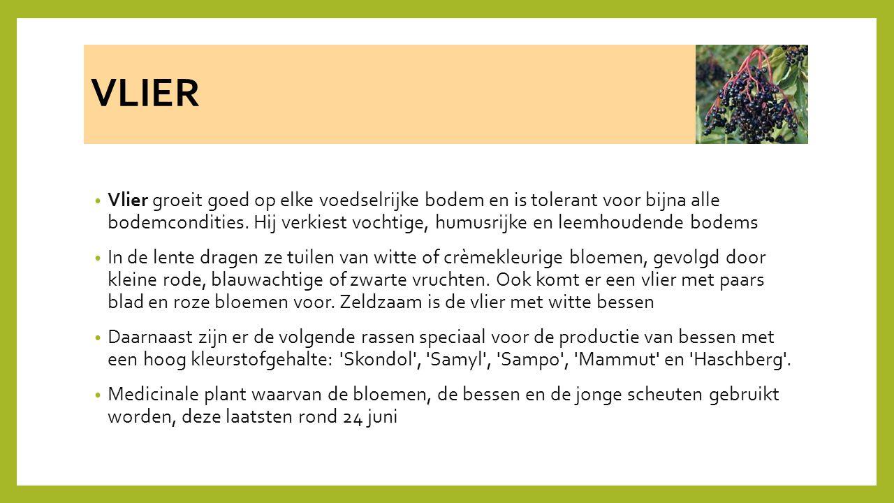 VLIER Vlier groeit goed op elke voedselrijke bodem en is tolerant voor bijna alle bodemcondities. Hij verkiest vochtige, humusrijke en leemhoudende bo