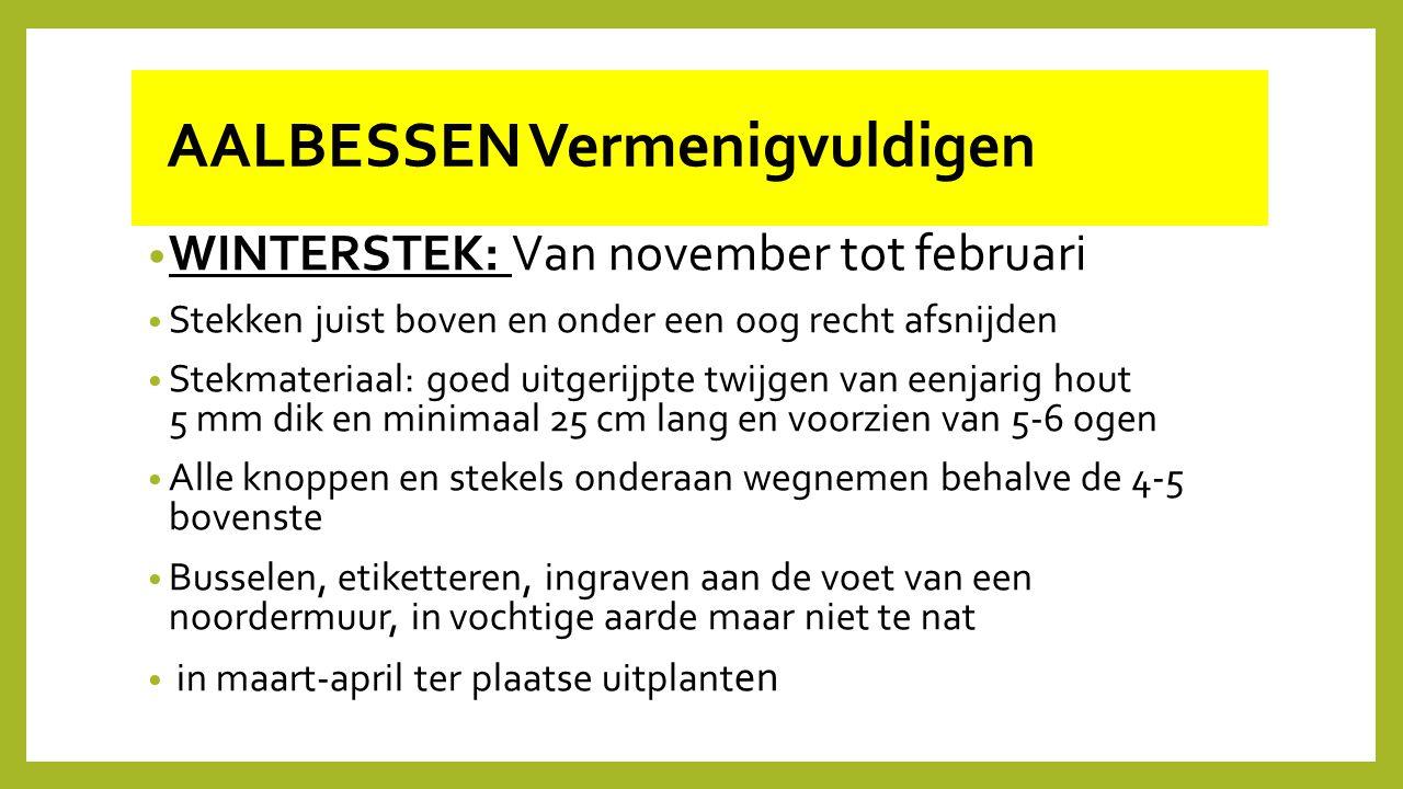 AALBESSEN Vermenigvuldigen WINTERSTEK: Van november tot februari Stekken juist boven en onder een oog recht afsnijden Stekmateriaal: goed uitgerijpte