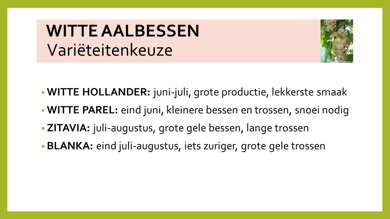 WITTE AALBESSEN Variëteitenkeuze WITTE HOLLANDER: juni-juli, grote productie, lekkerste smaak WITTE PAREL: eind juni, kleinere bessen en trossen, snoe