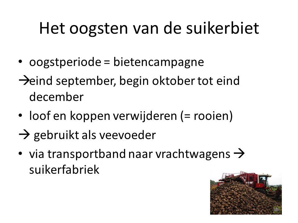 Het oogsten van de suikerbiet oogstperiode = bietencampagne  eind september, begin oktober tot eind december loof en koppen verwijderen (= rooien) 