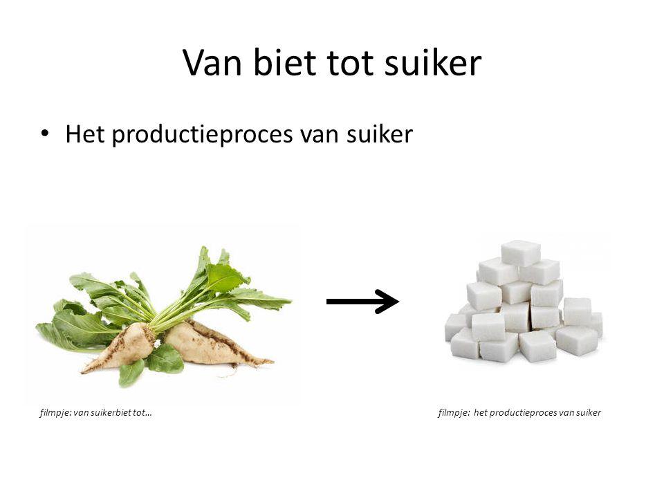 Van biet tot suiker Het productieproces van suiker filmpje: van suikerbiet tot…filmpje: het productieproces van suiker