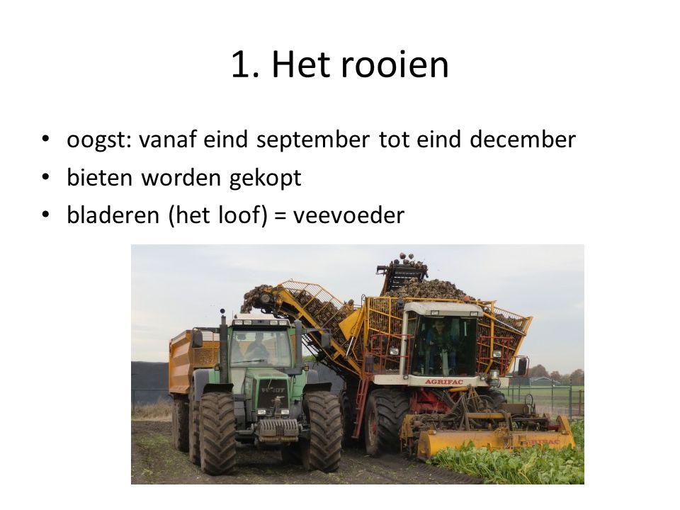 1. Het rooien oogst: vanaf eind september tot eind december bieten worden gekopt bladeren (het loof) = veevoeder