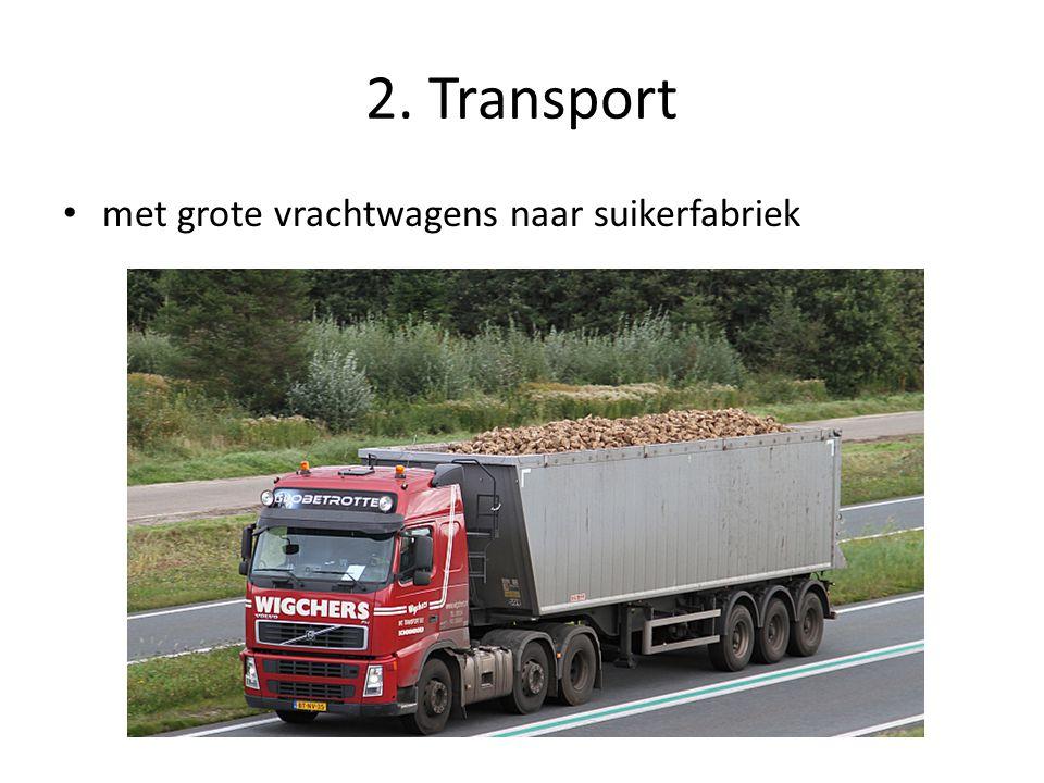 2. Transport met grote vrachtwagens naar suikerfabriek
