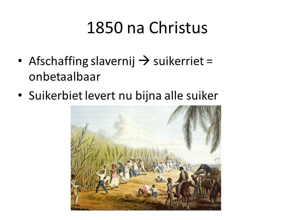 1850 na Christus Afschaffing slavernij  suikerriet = onbetaalbaar Suikerbiet levert nu bijna alle suiker