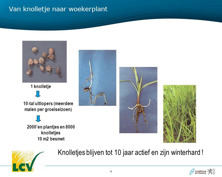 44 Van knolletje naar woekerplant 1 knolletje 10-tal uitlopers (meerdere malen per groeiseizoen ) 2000'en plantjes en 8000 knolletjes 10 m2 besmet Kno