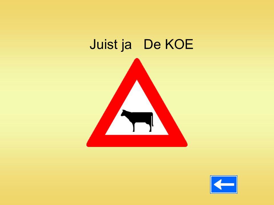 Juist ja De KOE