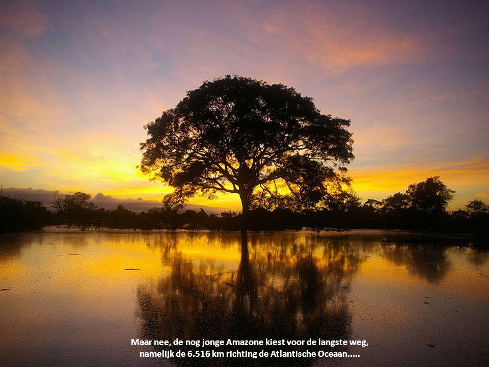 De Amazone ontspringt op 5.200 meter hoogte in de sneeuw van het machtige Andesgebergte. Deze in Peru gelegen gletsjer ligt op maar 190 km van de Grot