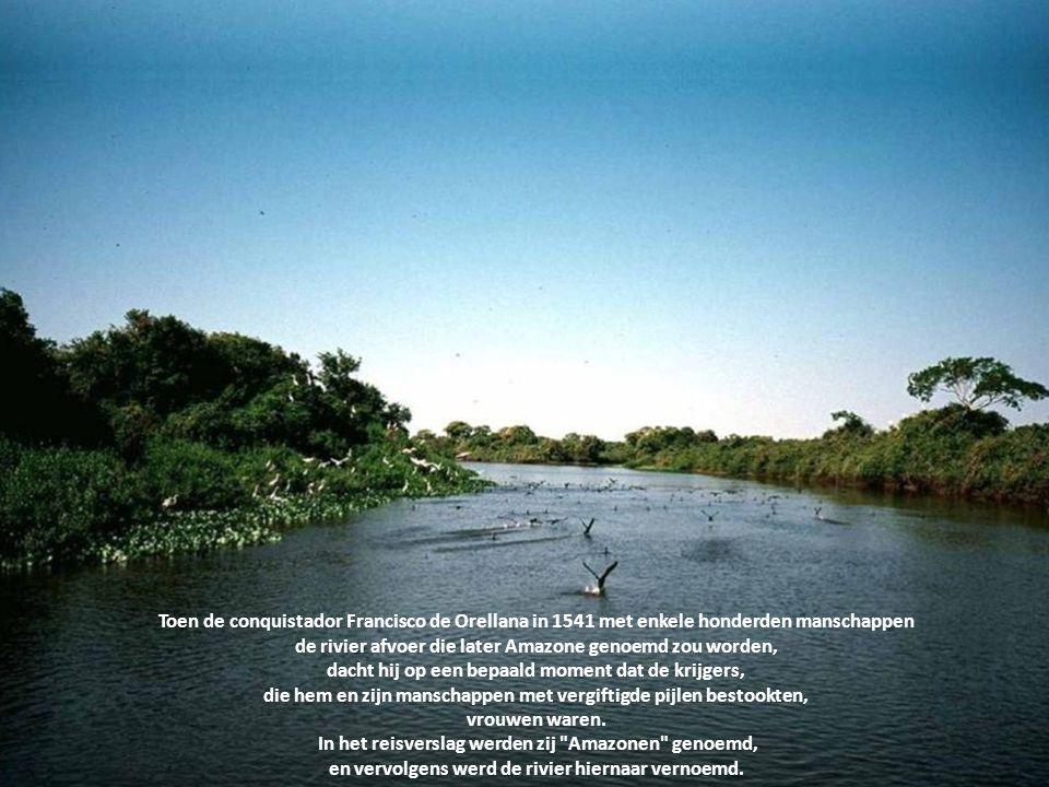 Maar nee, de nog jonge Amazone kiest voor de langste weg, namelijk de 6.516 km richting de Atlantische Oceaan.....