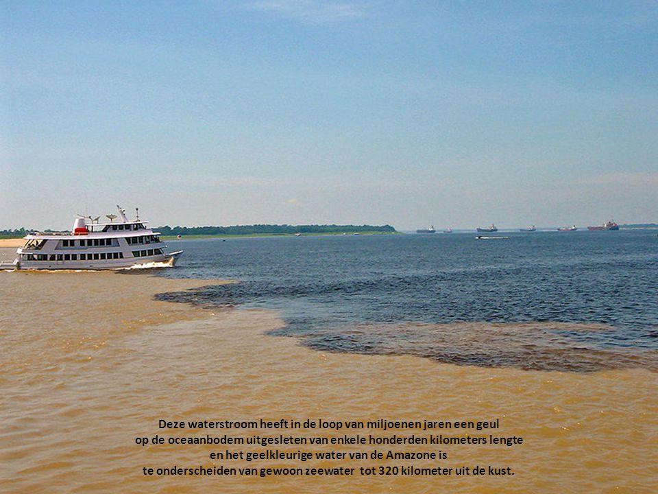 Als de Amazone uiteindelijk in de Atlantische Oceaan stroomt heeft zij het water afgevoerd van ruim 1100 zijrivieren. Per seconde brengt de Amazone op