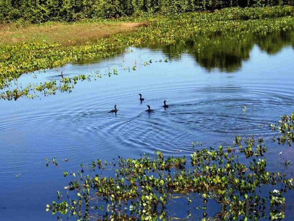 Toen de conquistador Francisco de Orellana in 1541 met enkele honderden manschappen de rivier afvoer die later Amazone genoemd zou worden, dacht hij o