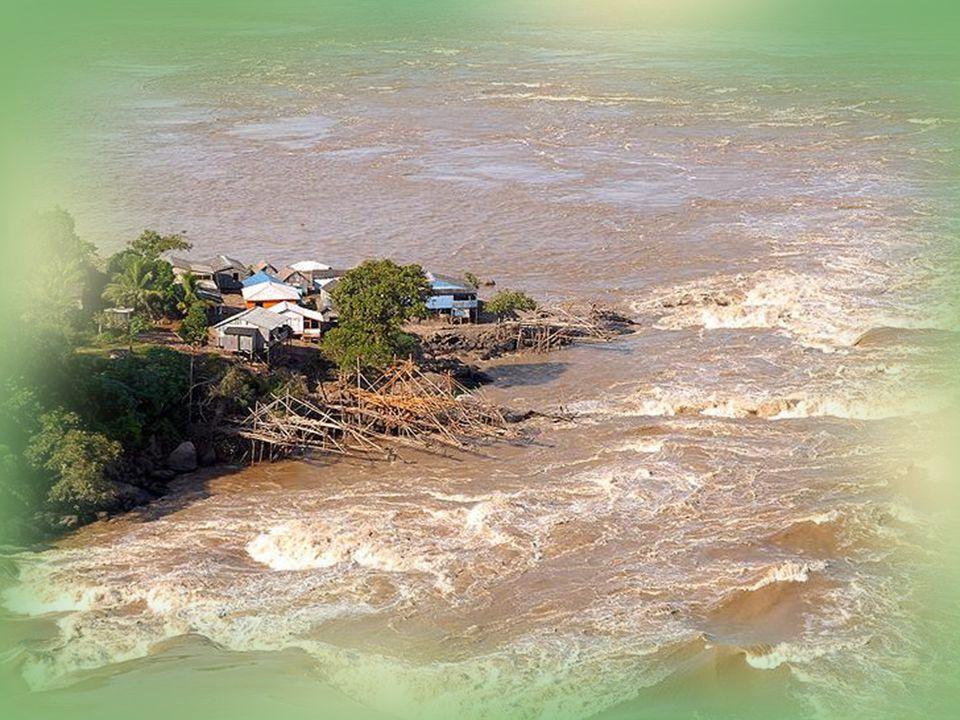 ....En de roze rivierdolfijnen, die tijdens het regenseizoen de hoofdrivier verlaten en het overstroomde regenwoudgebied in zwemmen, waar men ze tussen de bomen door kan zien zwemmen en jagen.