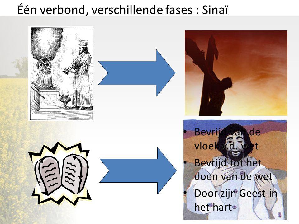 Één verbond, verschillende fases : Sinaï Bevrijd van de vloek v.d. wet Bevrijd tot het doen van de wet Door zijn Geest in het hart