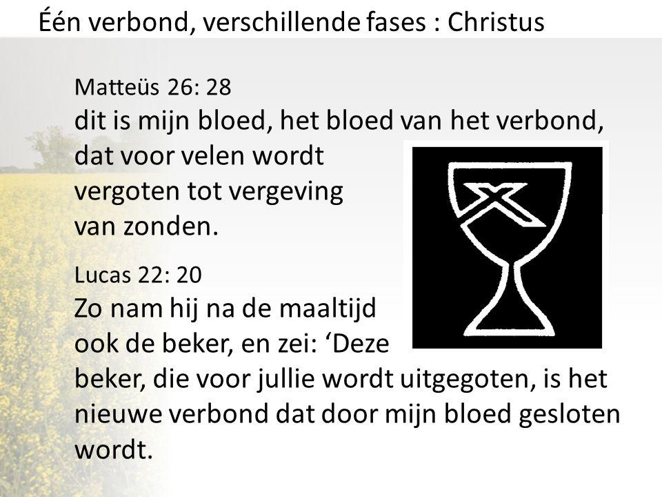 Één verbond, verschillende fases : Christus Matteüs 26: 28 dit is mijn bloed, het bloed van het verbond, dat voor velen wordt vergoten tot vergeving v