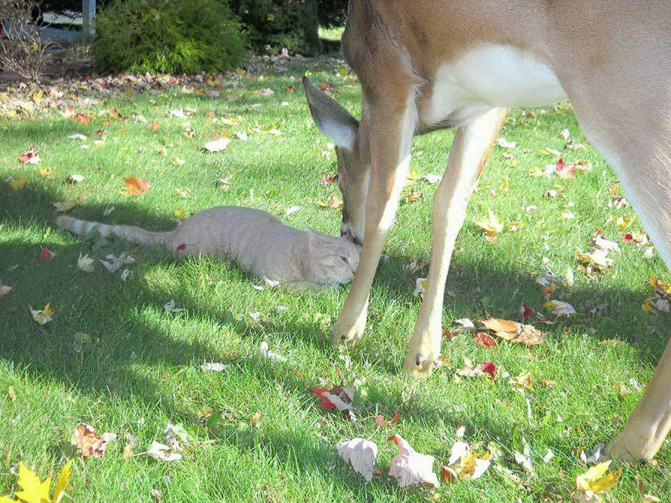 Een kat in Harrisburg, Pennsylvania, U.S.A. heeft een speciale vriend. Een kattenbezitter nam deze foto's tijdens een paar bezoekjes. Een kat in Harri