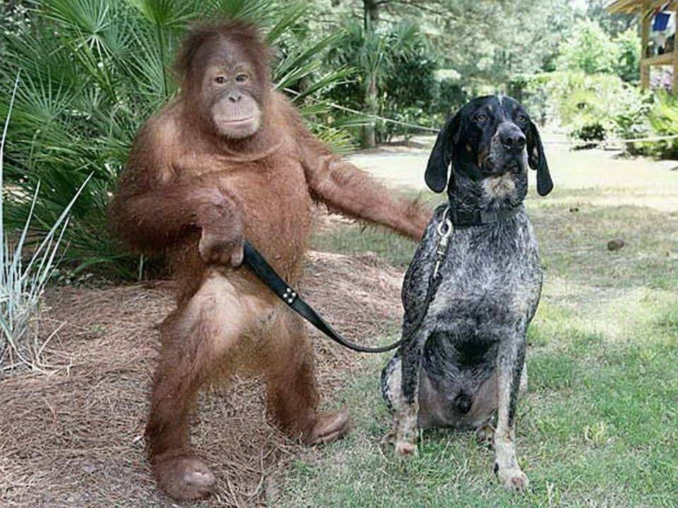 Na het verlies van beide ouders was dit orang-oetan jong drie jaar oud. Hij was zo depressief dat hij weigerde om iets te eten en hij reageerde niet g
