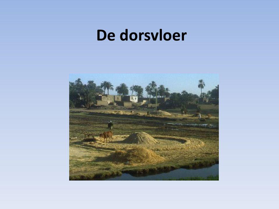 Tempel van Salomo gebouwd op de plaats van de dorsvloer 'waar de plaag/pest ophield, stopte' God stopte de plaag van de zonde door het werk, het offer van Jezus Christus, de dood van het kruis