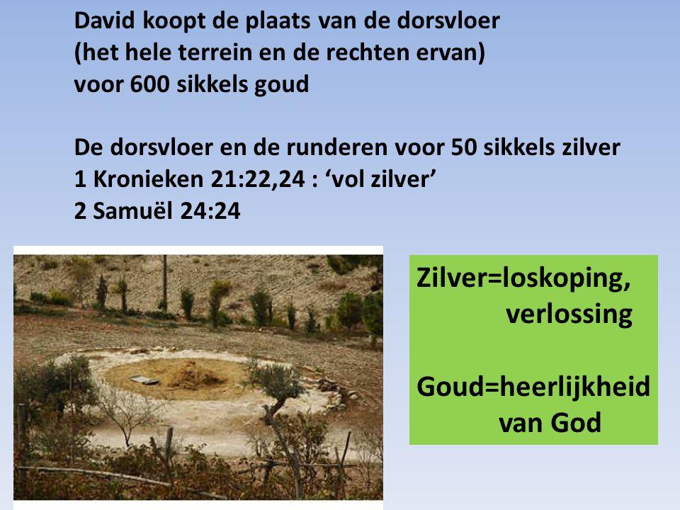 David koopt de plaats van de dorsvloer (het hele terrein en de rechten ervan) voor 600 sikkels goud De dorsvloer en de runderen voor 50 sikkels zilver